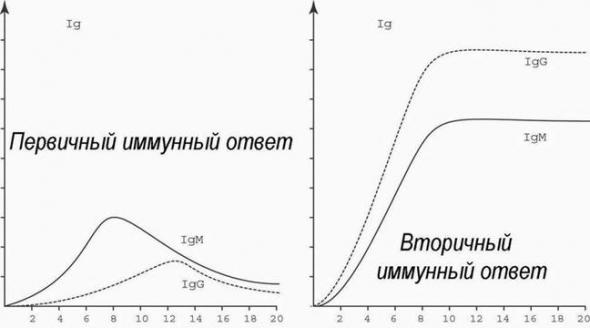 Наука! Как происходит заражение вирусом и как реагирует иммунитет