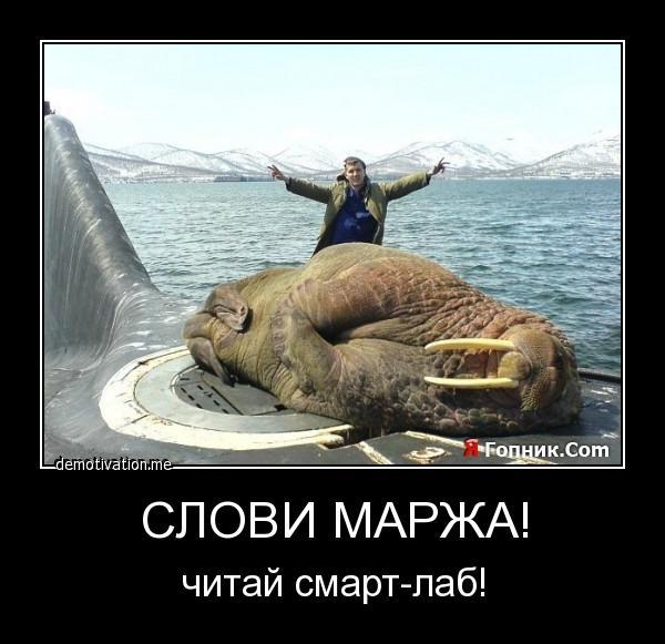 нас лучами демотиваторы с моржами можете