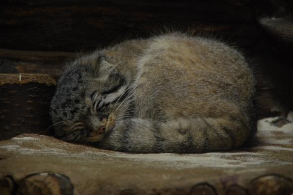 ЛизингТрейд наливает щедро или коты спят, а служба идет! Защита от волатильности