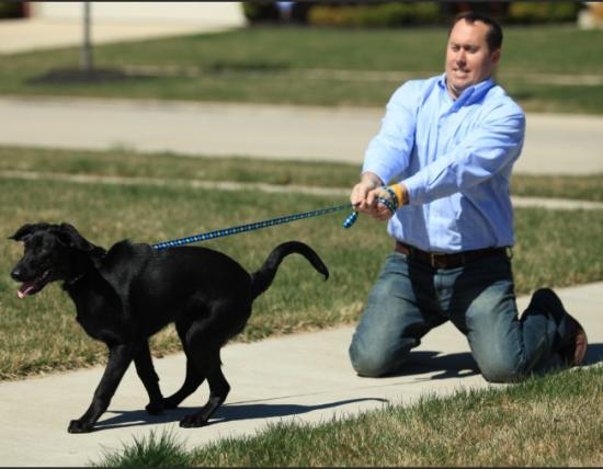 Тильтовый маржин колл (3) Отпусти собаку