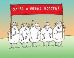Кто вы на рынке:Бык,Медведь или Свинья?и как Не стать Овцой!