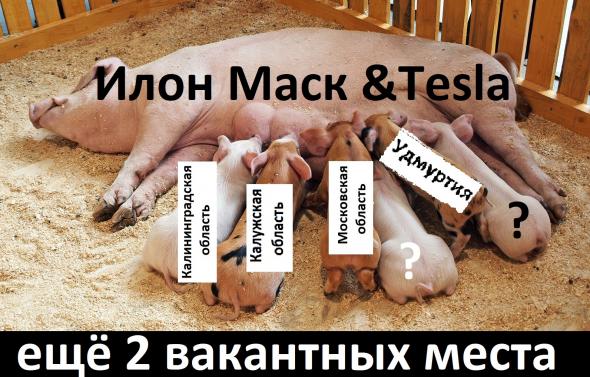 Илон Маск разместит Tesla в России