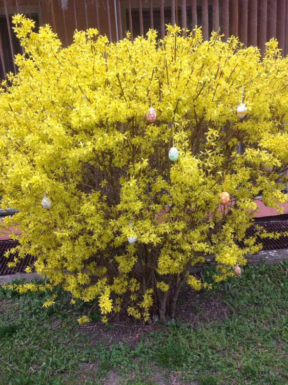 Цветущие яйца или алго на УГ.
